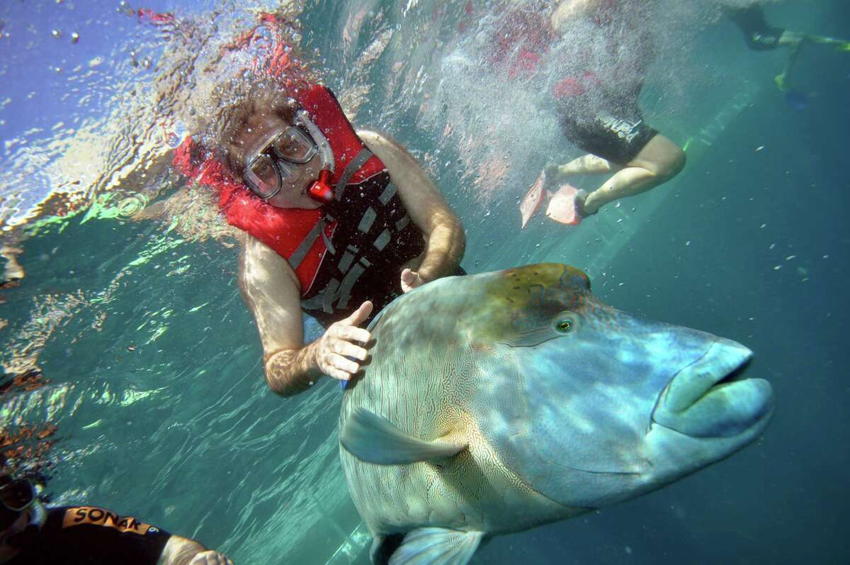 Local magician Gene Protas is also passionate about snorkeling and fishing. Here he is during a recent trip to the Great Barrier Reef.