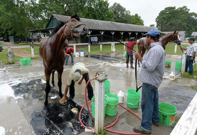 Skyring gets a bath following his morning workout Thursday, Aug. 8, 2013, at Saratoga Race Course in Saratoga Springs, N.Y. Skyring will compete in Saturday's Fourstardave Handicap at the historic track. (Skip Dickstein/Times Union) Photo: SKIP DICKSTEIN
