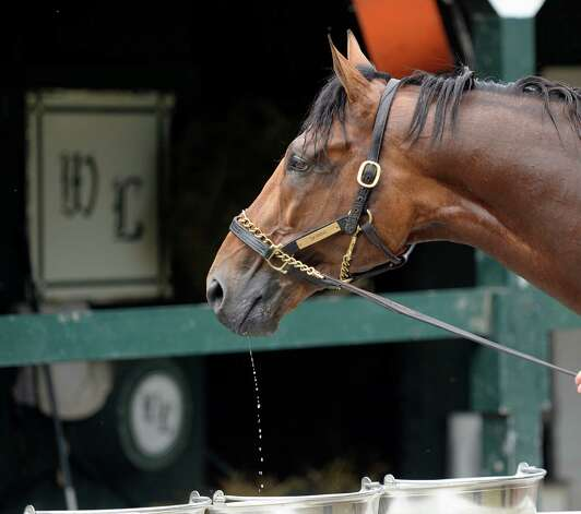 Skyring gets a sip of water following his morning workout Thursday, Aug. 8, 2013, at Saratoga Race Course in Saratoga Springs, N.Y. Skyring will compete in Saturday's Fourstardave Handicap at the historic track. (Skip Dickstein/Times Union) Photo: SKIP DICKSTEIN