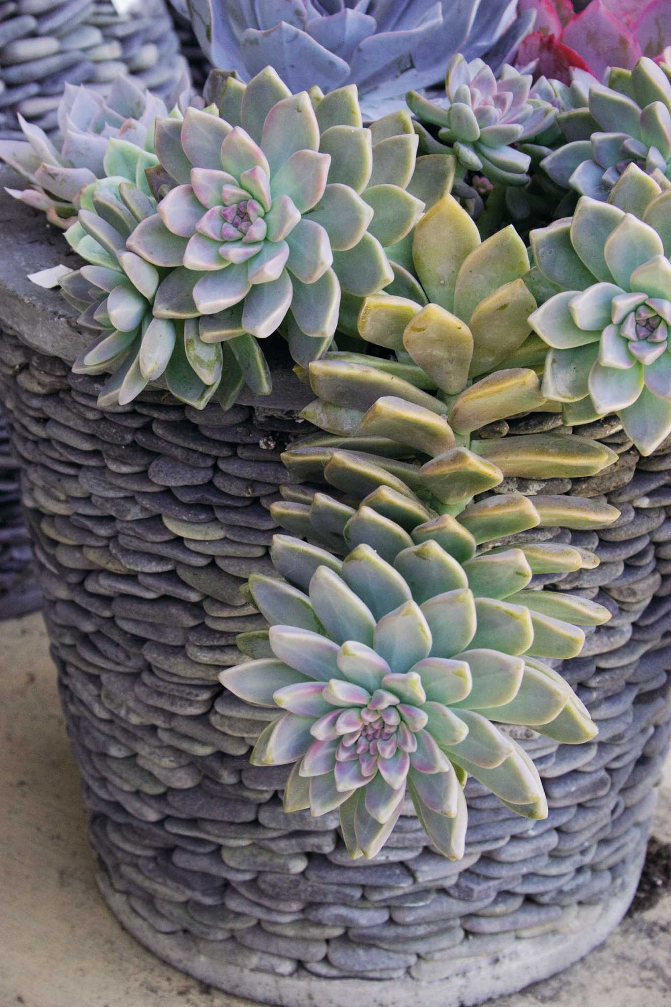 Succulent Containers A Cool Way To Enjoy Gardening In The Heat