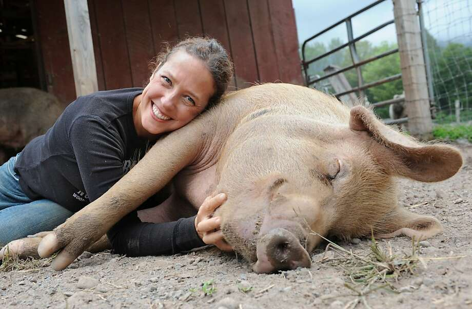 Lean on me: As a vegan and animal advocate, Jenny Brown would never think of raising Curley for meat at her Woodstock Farm Animal Sanctuary in Willow, N.Y. Especially since he makes such a comfy pillow when getting belly rubs. Photo: Lori Van Buren, Albany Times Union