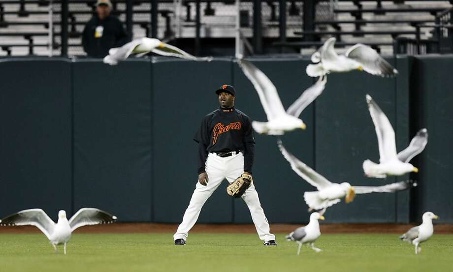 Seagulls have flocked to night games at AT&T Park for years. Not so in San Diego, apparently. Photo: Lance Iversen, San Francisco Chronicle