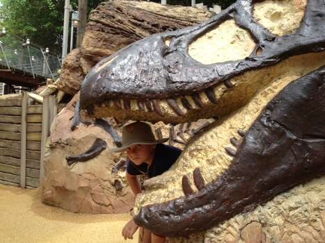 This was taken at Disneyworld this Summer.  My son has always been fascinated with dinosaurs so this was a real treat!