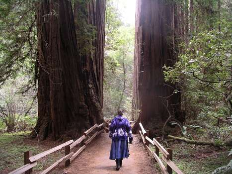 My wife Bonnie walking between two redwood trees at Muirs woods about an hour north odf San Fransico earlier this year.