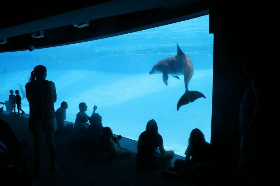 A crowd gathers in the underwater viewing area of the Texas State Aquarium to watch the Altlantic bottlenose dolphins in Corpus Christi. Photo: By Jennifer Roolf Laster, For The Express-News