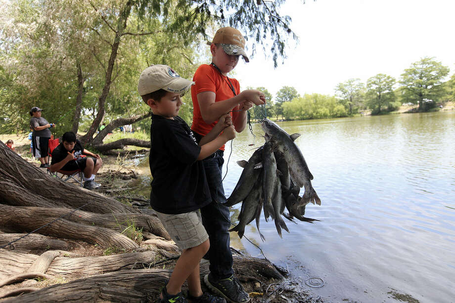 Tommy Driscoll, 5, (left) and Jacob Davis, 11, show catfish they caught Aug. 2 at Southside Lions Park. Photo: Edward A. Ornelas / San Antonio Express-News