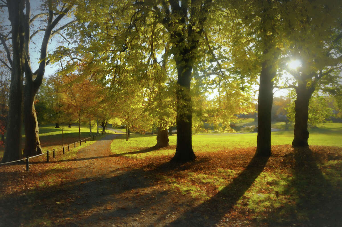 No. 10: Rye, New York Landscape composition of park