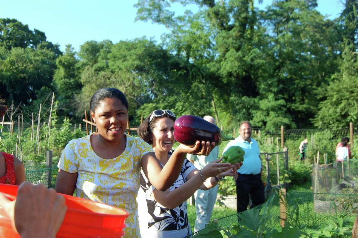 Luna Sailrilus harvests an eggplant and Hamide Gemajli harvests a pepper at the community garden at Fodor Farm in Norwalk Monday during the culmination of the Growing Gardens, Growing Health program.
