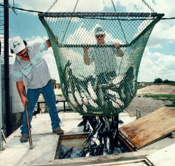 San Antonio's infamous catfish farm's well to be capped