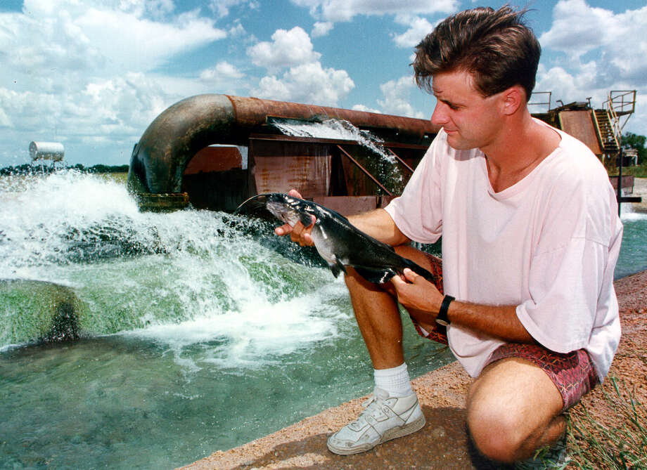The wells at the the Living Waters Artesian Springs catfish farm used 15 billion gallons of water per year at one time, about a quarter of the amount of water used by the entire city of San Antonio. The farm was bought by SAWS in 2000. Photo: San Antonio Express-News File Photo