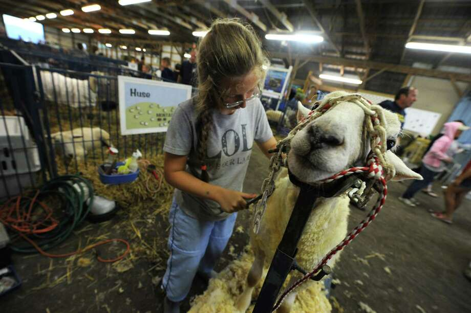 Johanna Huse of Guilderland cards her ram lamb during the Altamont Fair on Tuesday Aug. 13, 2013 in Altamont, N.Y. (Michael P. Farrell/Times Union) Photo: Michael P. Farrell / 00023489A