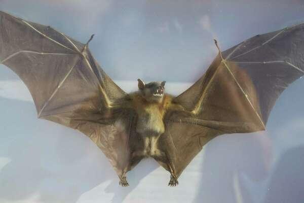 Bat Loco Bash at San Antonio Museum Reach/Urban Segment on Tuesday, Aug. 13, 2013.