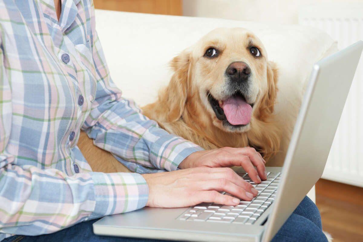 Research . Find out if you can purchase pet injury coverage through your car insurance policy.