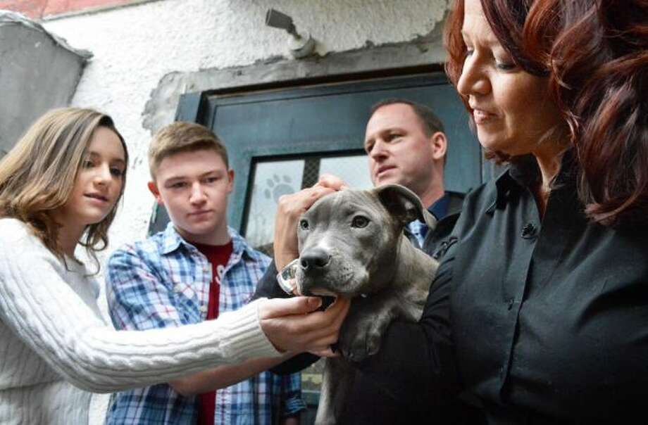 The Kittle family, from left, Jordan, 14, Seth, 17, Sean and Susan, of Poestenkill with their new dog Pearl, one of the pit bull puppies found injured by train tracks, at the Mohawk Hudson Humane Society in Menands Wednesday Dec. 5, 2012. (John Carl D'Annibale / Times Union)