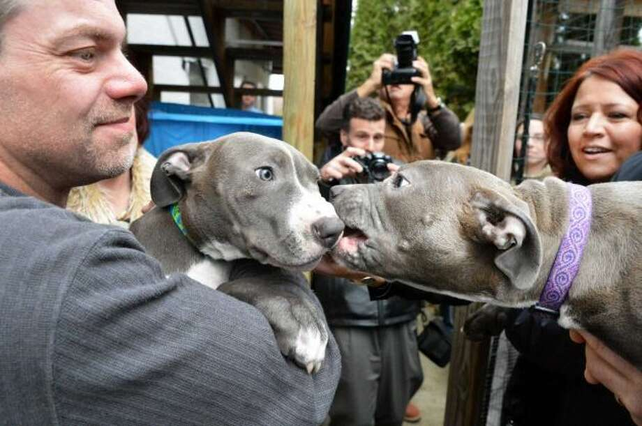 """Hudson"", left, and and ""Pearl"", the puppies found injured by train tracks, in the arms of their adoptive families, Richard Nash, left, of Schodack, and Susan Kittle of Poestenkill, at right, at the Mohawk Hudson Humane Society in Menands Wednesday Dec. 5, 2012. (John Carl D'Annibale / Times Union)"