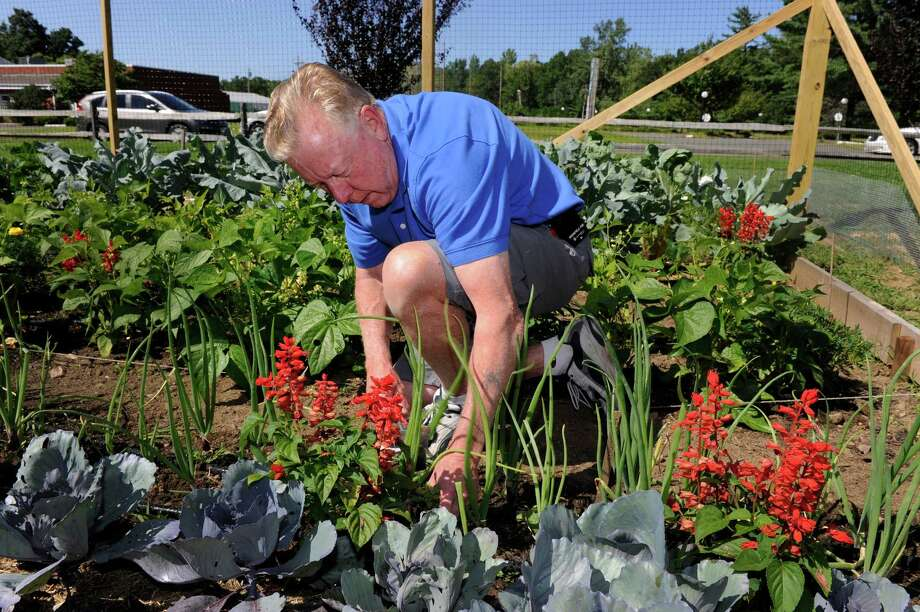 Lou Menendez, 66, of Brookfield, a master gardener intern, pulls weeds in the demonstration vegatable garden at the Fairfield County Agricultural Extention Center on Route 6 in Bethel, Conn., Monday, Aug. 5, 2013. Photo: Carol Kaliff / The News-Times