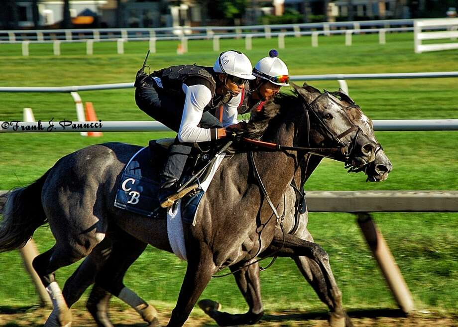 Two grays, trained by local native  Chad Brown work out at the training track at Saratoga. (Frank Panucci) Photo: Picasa