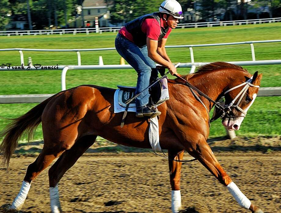 Travers entry Will Take Charge, trained by D. Wayne Lukas (Frank Panucci) Photo: Picasa