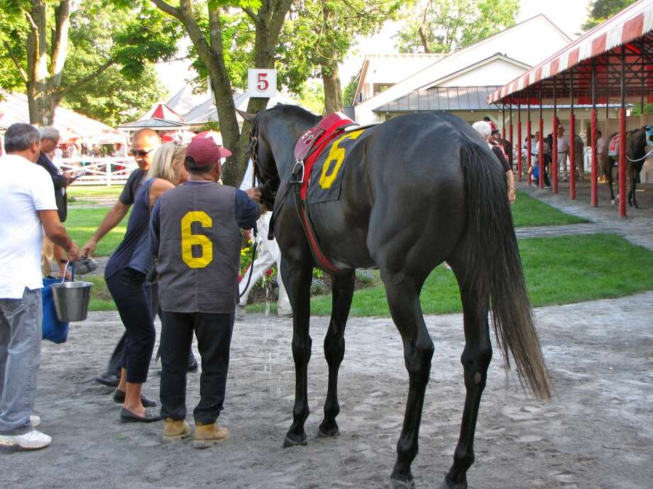 Our friend's horse, Birchwood Road (#^6), on opening day at Saratoga.  Temps in the high 90's that afternoon.  The handlers went to great lengths to see that the horses were cooled down prior to being saddled up that day. (Karen Casey)