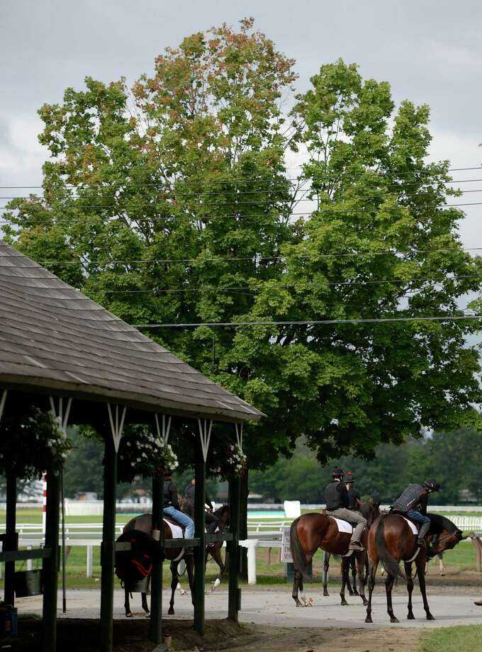 Members of the Phipps Stables go out for their morning exercise Wednesday, Aug. 14, 2013, at Oklahoma Training Center in Saratoga Springs, N.Y.  (Skip Dickstein/Times Union) Photo: SKIP DICKSTEIN