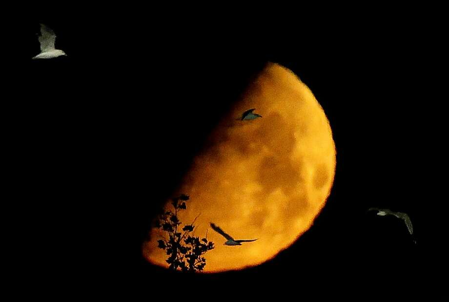 A waxing gibbous moonglows as birds fly in East Rutherford, N.J. Photo: Julio Cortez, Associated Press