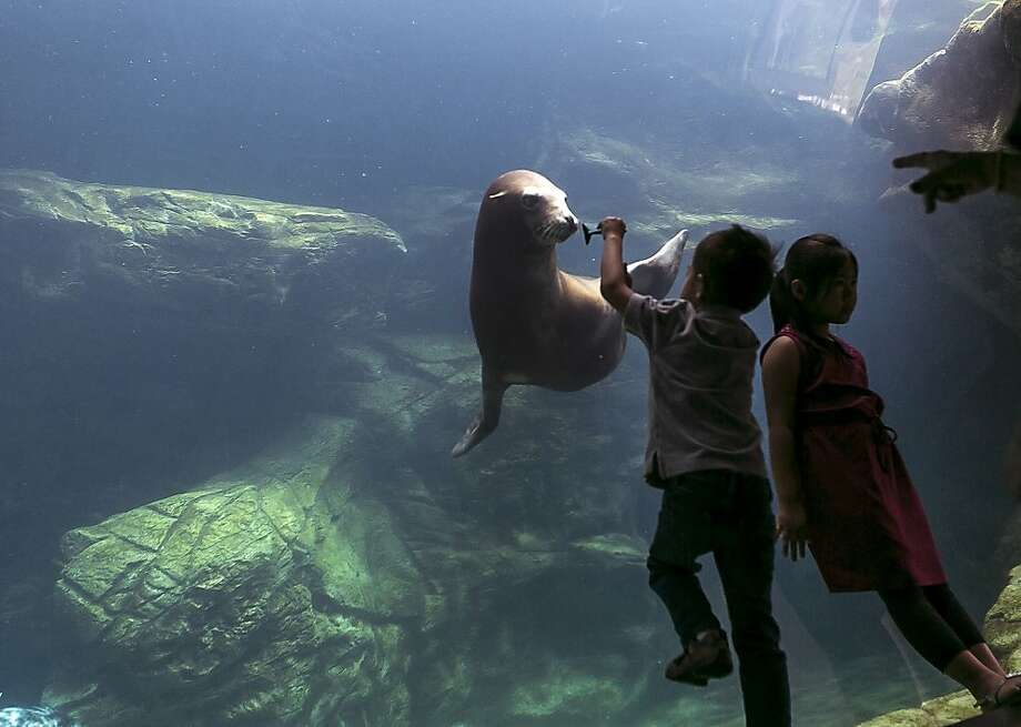 Wanna bite? Five-year-old Joseph Han teases a sea lion with a toy fish at the Aquarium of the 