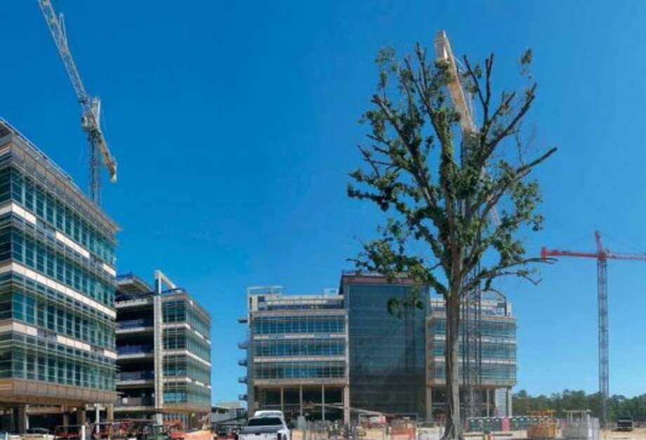 A 90-foot-tall Heritage Shumard Oak has been on the site for 150 to 200 years and was moved to the central commons. Photo: Exxon Mobil