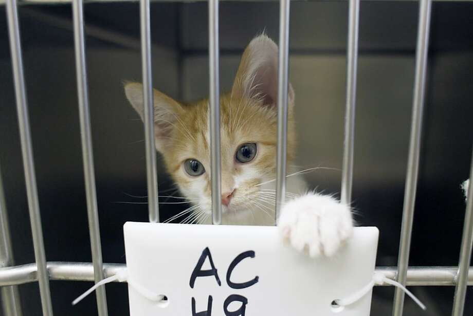 It appears to be code - A = Adopt, C = Cat, H = Hurry, and ... shoot, we can't make out the last 