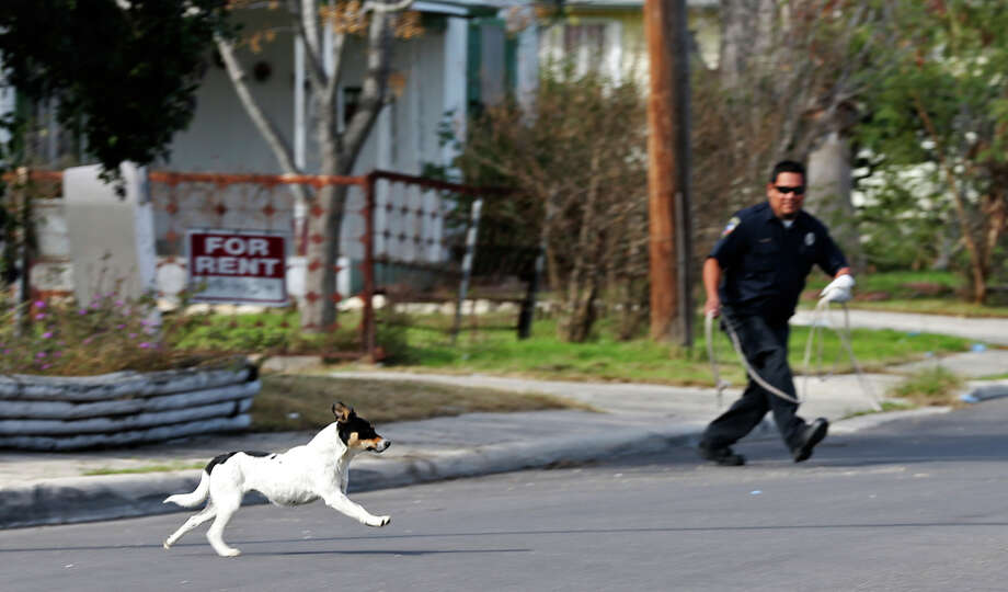 20. Public nuisance (own animal)