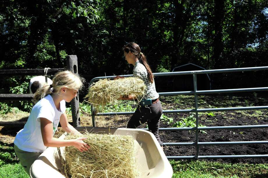 Ella Peel, of England, helps Catherine McIntyre, instructor to feed the horses at Country Lane Farm's John Street Barn in Greenwich, Conn., Wednesday, August 14, 2013. Photo: Helen Neafsey / Greenwich Time