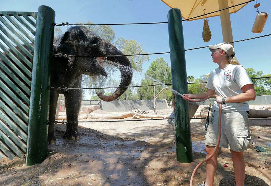 Handler Cheryl Becker cools off an Indian Elephant, at the Phoenix Zoo, Friday, June 28, 2013 in Phoenix. Excessive heat warnings will continue for much of the Desert Southwest as building high pressure triggers major warming in eastern California, Nevada, and Arizona. Dangerously hot temperatures are expected across the Arizona deserts throughout the week with a high of 118 Friday. Photo: Matt York, Associated Press / AP