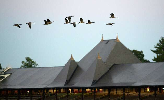 Geese fly over the empty clubhouse in the early morning of Aug. 15, 2013 at the Saratoga Race Course in Saratoga Springs, N.Y.   (Skip Dickstein/Times Union) Photo: SKIP DICKSTEIN