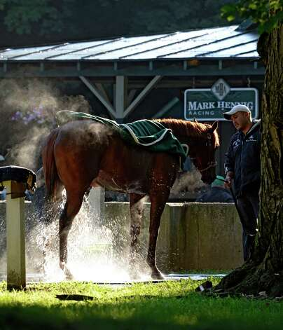 One of the Mark Hennig racing stable charges gets his bath in the cool morning air of Aug. 15, 2013 at the Saratoga Race Course in Saratoga Springs, N.Y.   (Skip Dickstein/Times Union) Photo: SKIP DICKSTEIN