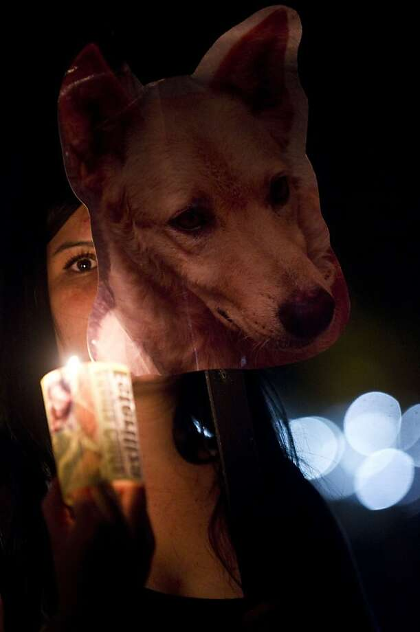 An activist from the animal rights group AnimaNaturalis takes part in a demonstration on the Homeless Animals Day in Medellin, Antioquia department, Colombia, on August 15, 2013.  AFP PHOTO/Raul ARBOLEDARAUL ARBOLEDA/AFP/Getty Images Photo: Raul Arboleda, AFP/Getty Images