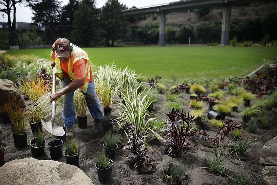 Jose Macias works among the plants in the biofiltration pool next to the field at Cayuga Park. Photo: Lea Suzuki, The Chronicle
