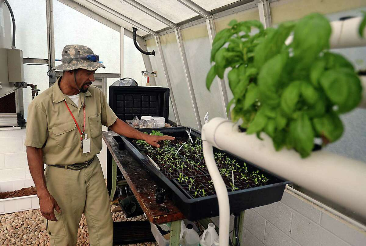 Instructor Gregg Alford works in the greenhouse at the Stonewall Jackson Training School in Concord, N.C. The garden is part of a project to build 100 aquaponics gardens, 33 of them in Haiti.