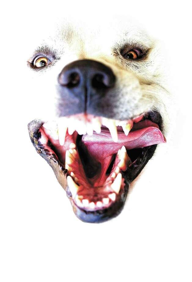 San Antonio No. 2 in dog bites, says U.S. Postal Service Photo: Getty Images