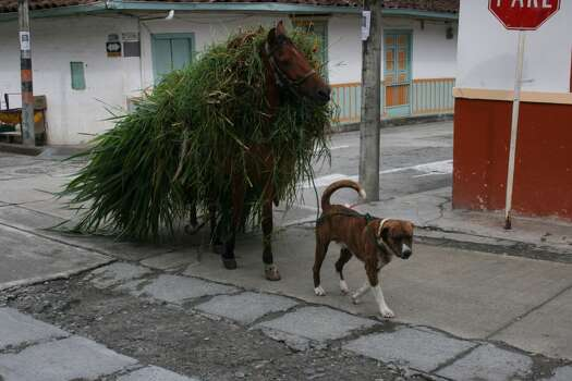 Pereira Colombia.   No free lunch here. Even the dog works (leading the horse)