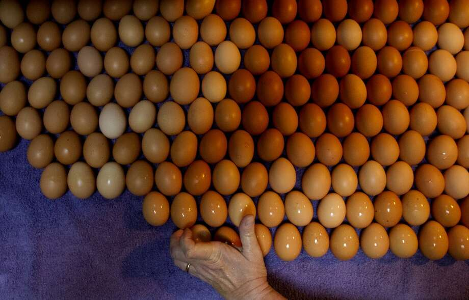 Ohio: Cheri Glover places an egg to dry after hand washing it in Cleveland. Photo: Cody Duty, Houston Chronicle