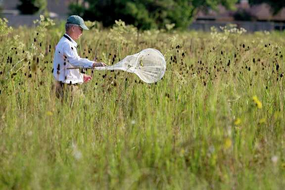 Don Verser, a volunteer with Houston Audubon and Nature Discovery in Bellaire, sweeps for bugs at the Deer Park prairie.