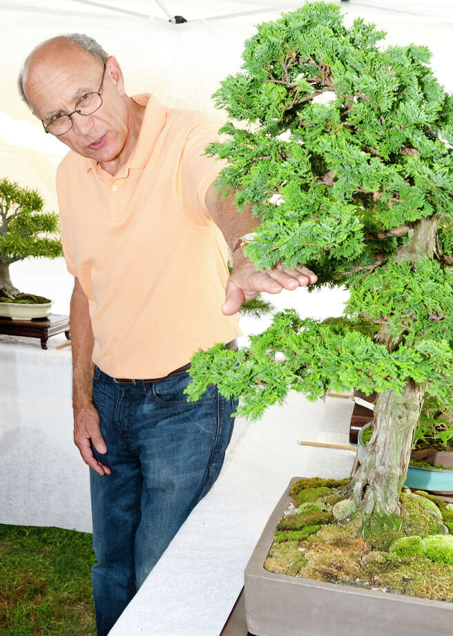 Al DeAngelis, of Trumbull, speaks about a Hinoki Cypress Bonsai tree on display in the Bonsai Society of Greater New Haven tent during the 39th annual Milford Oyster Festival in downtown Milford on Saturday, Aug. 17, 2013. Photo: Amy Mortensen / Connecticut Post Freelance