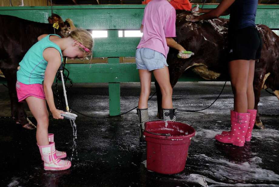 Ella Trahan, 7, from Rotterdam cleans off her scrub brush as she helped the Booth family clean their cattle at the Washington County Fair grounds on set up day at the fair on Sunday, Aug. 18, 2013 in Greenwich, NY.  The fair opens for the week at 5pm on Monday.  (Paul Buckowski / Times Union) Photo: Paul Buckowski / 00023176A