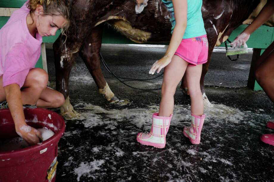 Bryanna Booth, left, 13, works at cleaning up the heifer she will show at the Washington County Fair grounds on set up day at the fair on Sunday, Aug. 18, 2013 in Greenwich, NY.  Booth will compete on Thursday and Friday.   The fair opens for the week at 5pm on Monday.  (Paul Buckowski / Times Union) Photo: Paul Buckowski / 00023176A