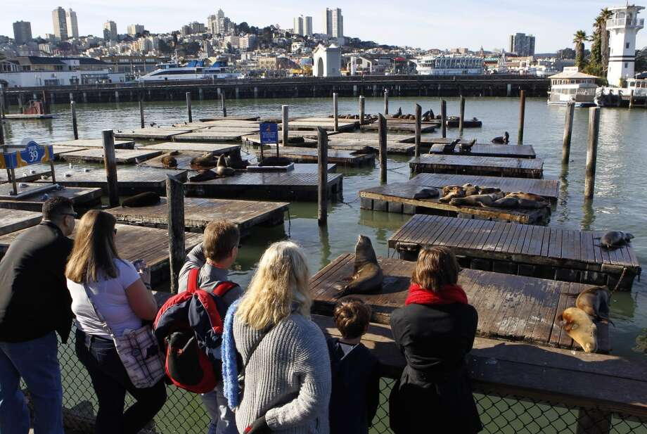 Visit everybody's favorite sea lions at Pier 39 (if they haven't disappeared). Photo: Chronicle File Photo