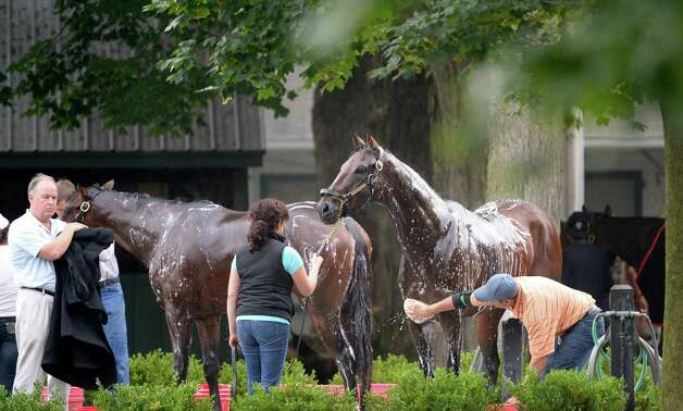 Kentucky Derby winner Orb  gets a bath Monday morning, Aug 19, 2013, following his final major work on the Oklahoma Training Center track in Saratoga Springs, N.Y.  Orb will compete in Saturday's Travers Stakes at Saratoga Race Course.  (Skip Dickstein/Times Union) Photo: SKIP DICKSTEIN