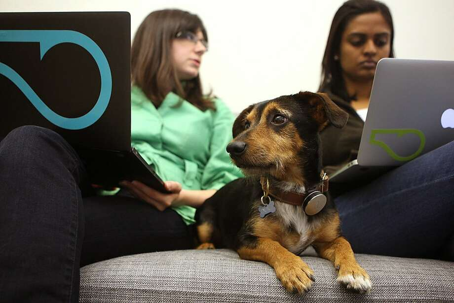 Using technology to keep Fido fit and happy