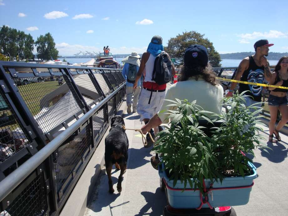 This medical cannabis patient and veteran from Okanogan county, Washington, wanted the world to see his pot plants, so he strapped them to the back of his mobility scooter and headed for Seattle Hempfest. Photo: Ben Livingston