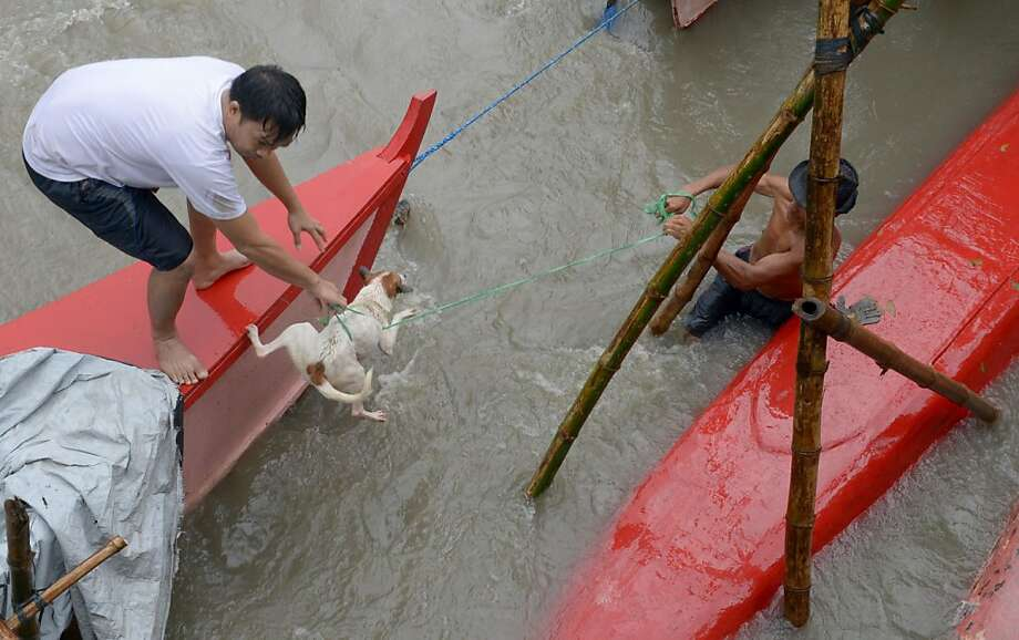 Puppy saved: Villagers rescue a dog that was carried away by floodwaters in the farming 