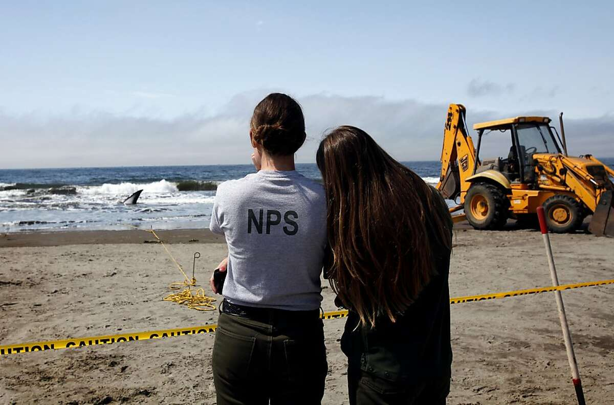 Park service workers watched the rescue efforts.