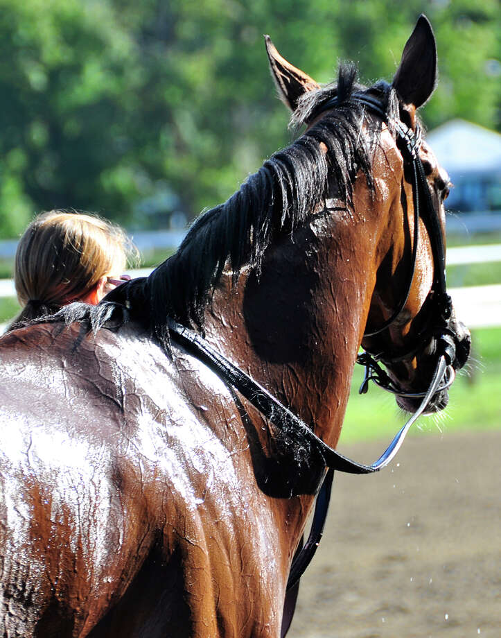 This stakes running filly heads back to the barn after the running of the Waya stakes. (George Zilberman)